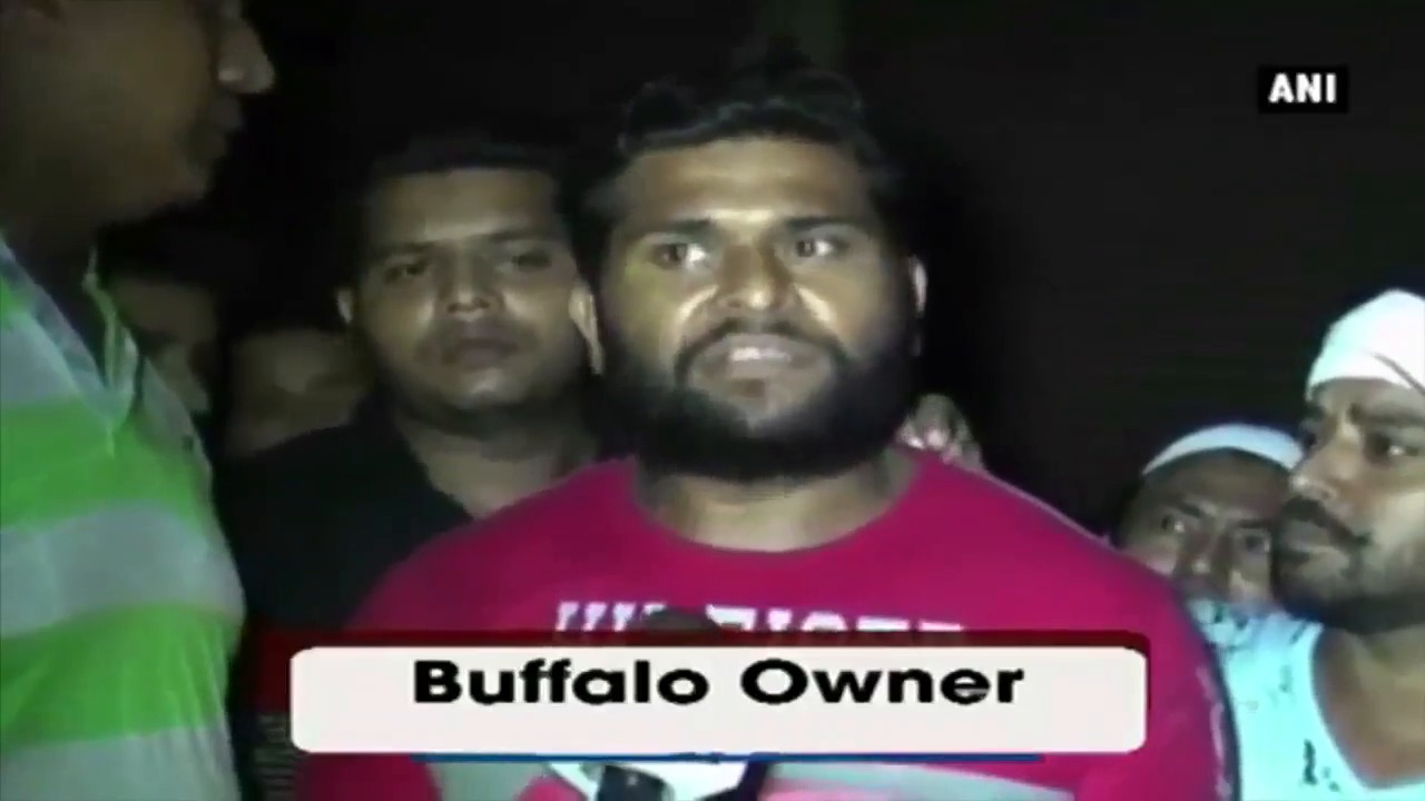 A Giant Buffalo Weighing 1.8-tonne Attracts Visitors To The Cattle Market In Moradabad