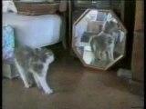 Humour vidéo drole ''les chats''