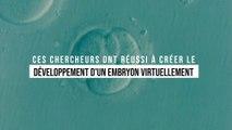 Ces chercheurs ont réalisé l'exploit de reproduire le développement d'un embryon dans une simulation