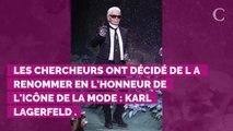 Karl Lagerfeld : des scientifiques baptisent une araignée à so...