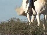 Randonnées à cheval en Camargue