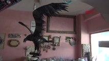 HATAY Hurda parçalarından 80 kilo ağırlığında kartal heykeli yaptı