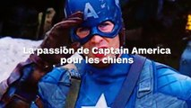 Chris Evans interrompt interview pour caresser un chien