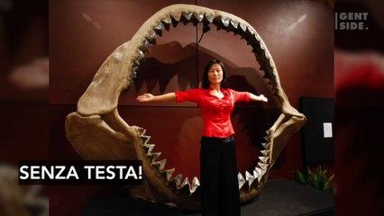 Il mistero dell'enorme squalo senza testa