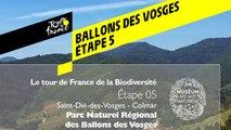 Étape 5  : Parc naturel régional des Ballons des Vosges