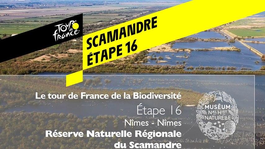 Étape 16 : Réserve naturelle régionale du Scamandre