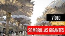 [CH] Las sombrillas gigantes que tapan el Sol en Arabia Saudí