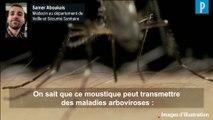 Moustique-tigre :  «  Cet insecte peut transmettre des maladies arboviroses »