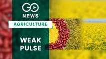 Pulses & Oilseed Production Down