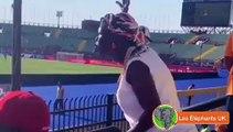 Revivez les réactions les plus hilarantes sur le match Cote d'ivoire vs Maroc !