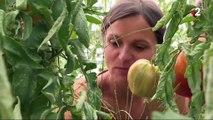 Alimentation : une start-up de producteurs bio valorise les produits locaux