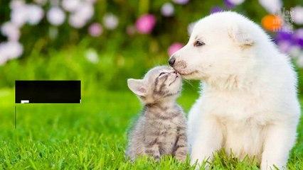 Siete tipi da cani o da gatti ? Scopritelo, in base al vostro segno zodiacale !5742
