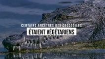 Certains ancêtres des crocodiles étaient végétariens