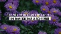 Ne plus tondre le bord des routes : une bonne idée pour la biodiversité