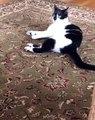 Ce chat est un grand peureux. Regardez ce qui va l'effrayer !
