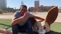 """Yazid (mascotte Fennec) : """"Je rêve de défiler dans le bus à Alger avec les joueurs et la Coupe d'Afrique"""""""