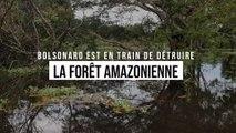 Bolsonaro est en train de détruire la forêt amazonienne