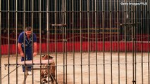 Circus Trainer  Killed By Four Tigers