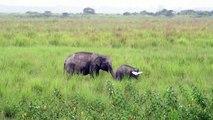 موسم الأمطار يشكل خطرا كبيرا على وحيد القرن في الهند