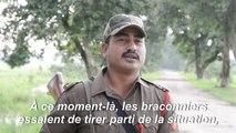 Mousson et braconnage: un parc national indien se prépare