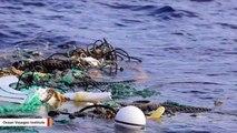 Hundreds Of Sharks Tangled In Plastic: Study