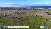 Terres australes : désormais au patrimoine mondial de l'Unesco