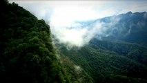 La forestación, la mejor arma contra el cambio climático