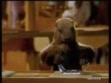 Pub milka - la marmotte