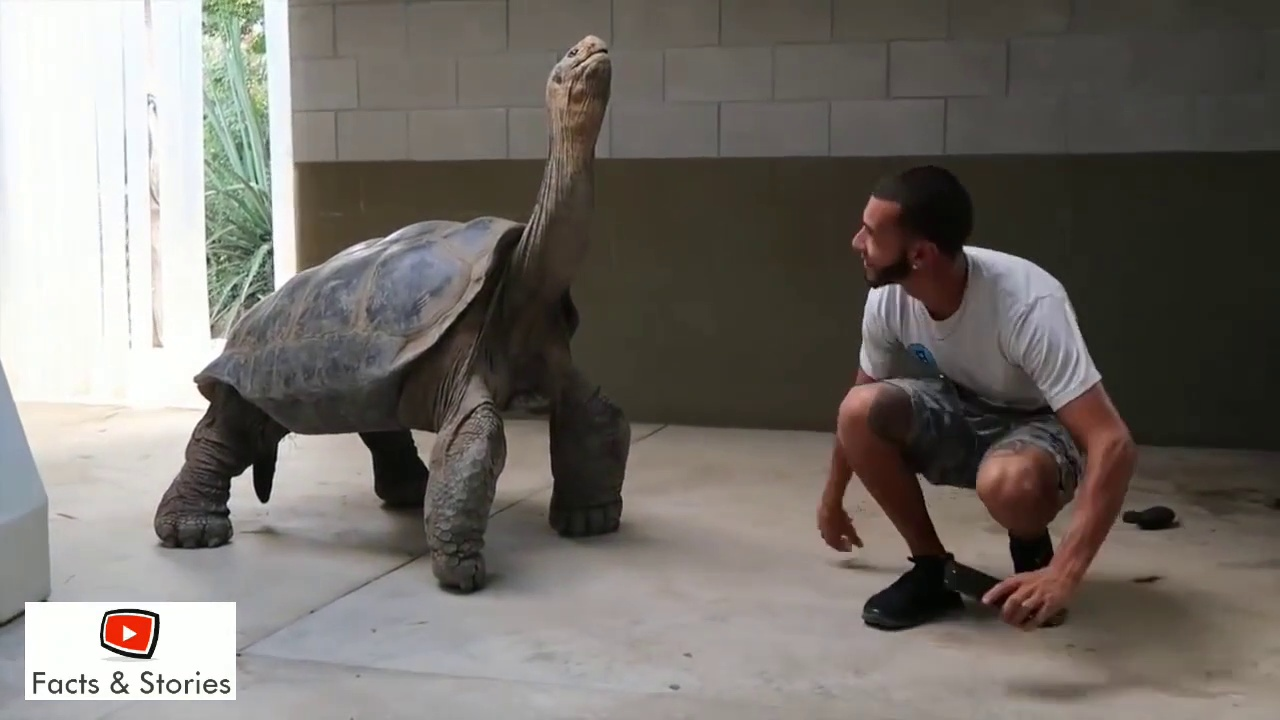 Tortoise is So Big We Could Ride It