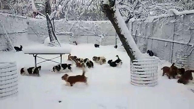 Neve alla Domus Aventina