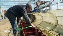 L'intégration de réfugiés en France avec les fermes agro-écologiques grosses demandeuses de main-d'œuvre