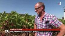 Viticulture : bientôt des vignes qui survivent au réchauffement climatique ?
