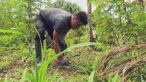 البيرو - الغابات المطيرة مهددة بالجفاف