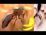 Robot insects with Laser Energy - Technology of the Future