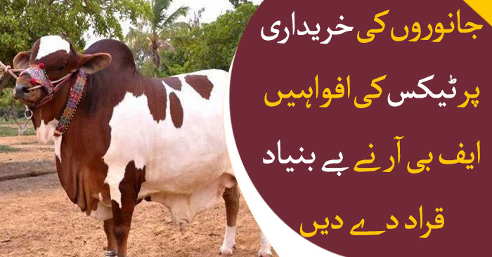 No tax implemented on cattle market; FBR