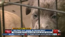 Helping out dogs in Ridgecrest