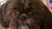 飼い主「死んだら愛犬と一緒に埋葬されたい」→健康な犬が安楽死に - トモニュース
