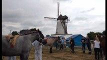 Un concours de chevaux de trait à la fête du moulin d'Ostiches