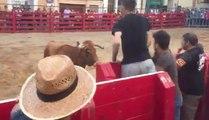 Quand un taureau calme un homme qui le provoque derrière une barrière !