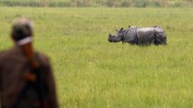 India deploys military for the first time to protect rhinos at Kaziranga National Park