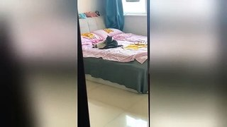 Chinese woman catches her cats hugging on her bed