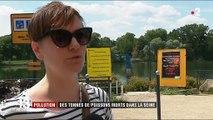 Pollution : des tonnes de poissons morts dans la Seine