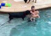 Quand un chien a très peur pour un bébé dans une piscine !