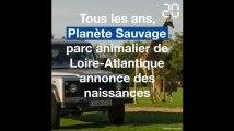 Loire-Atlantique: Voici les dernières naissances à Planète Sauvage