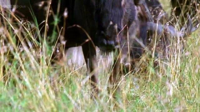 BBC Natures Microworlds (02of13) Serengeti