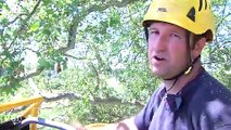 Élagueurs : ils travaillent à 40 mètres du sol