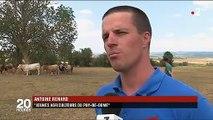 Sécheresse : les éleveurs face au manque de foin et d'eau