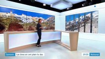 Santorin : le calvaire des ânes maltraités pour le tourisme
