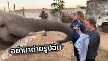 ใครอนุญาตให้ถ่ายรูป ห๊ะ !! พี่ช้างใหญ่ ใช้งวงตบหน้าสาว หลังเธอยกโทรศัพท์จะถ่ายรูป