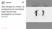 La progression du moustique tigre favorise leur propagation des maladies virales en France